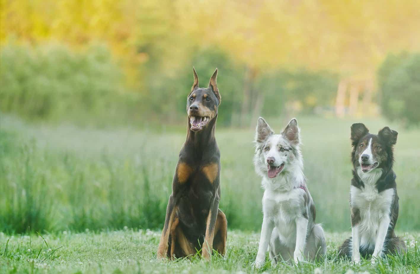 charlotte nc dog trainer