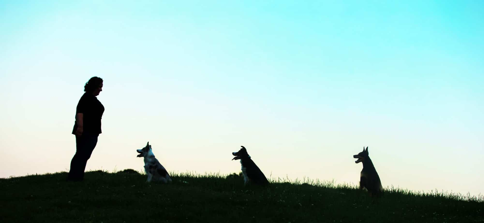 Charlotte dog trainers